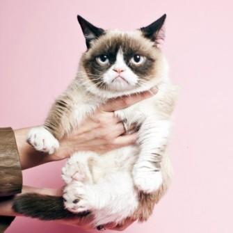 KEDİ MALLIKLARI: HOW TO LIVE WITH CATS
