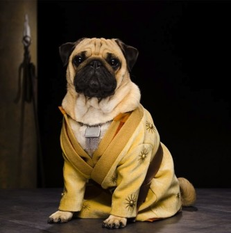 GAME OF THRONES'UN YENİ YILDIZLARI PUG'LAR