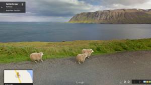 KOYUNLAR İÇİN GOOGLE STREET VIEW: GOOGLE SHEEP VIEW