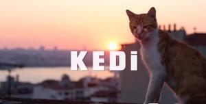 İSTANBUL'UN KEDİLERİNE AİT BİR BELGESEL: KEDİ