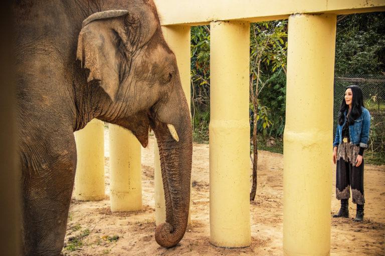 cher, dünyanın en yalnız filinin kurtarılma hikayesini belgesele dönüştürdü